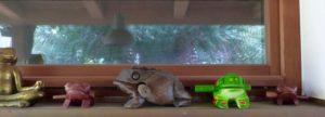 Rana der Frosch