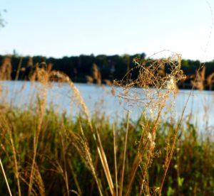 Blick auf den See Gräser im Vordergrund